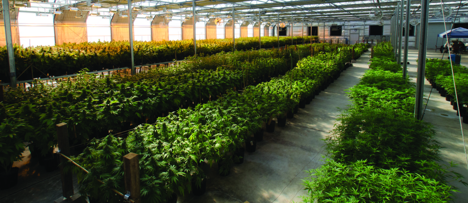 360 VIRTUAL TOURS FOR CANNABIS-RELATED BUSINESSES